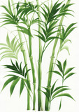 Watercolor painting of palm bamboo