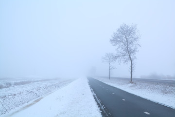 dark road and frosty tree in winter misty day