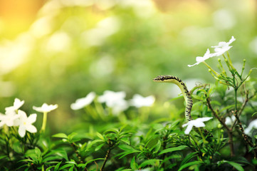Bad Snake in the flowers