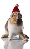 Christmas, Eastern, bunny, rabbit