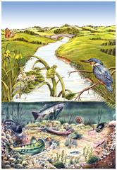Saubere Flusslandschaft.Biotop