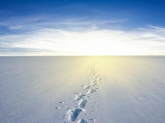 white snow desert