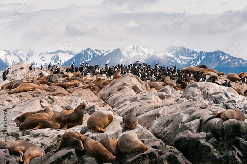 Sea Lions and cormorants in Beagle Channel, Ushuaia (Argentina)