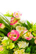 spring flowers background on white background