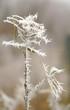 zima szron szadź lód kryształ