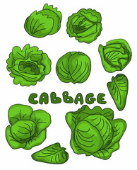 Set cabbage doodle background