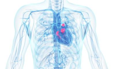 working heart valves