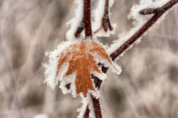 Macro of a Frozen Leaf