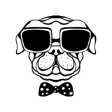 Dog with a bow and glasses isolated in black and white
