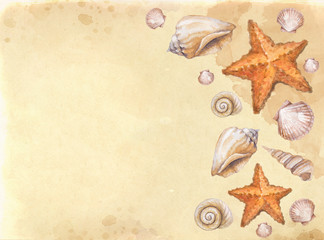 Watercolor background with shells and sea star illustrations