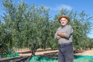 Farmer of olives