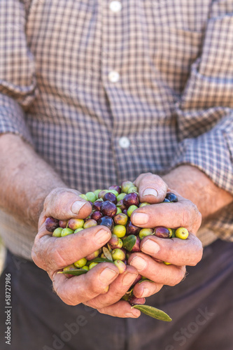 hands of farmer with olives
