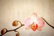 grunge orchid flower