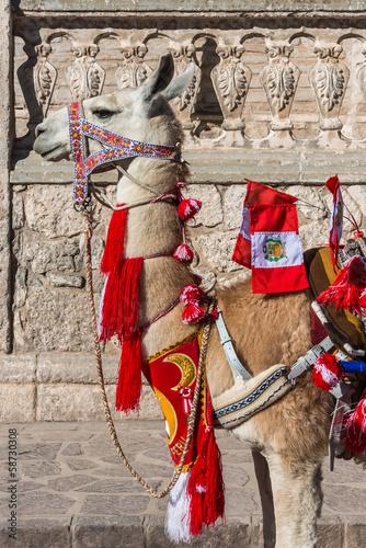 Foto op Plexiglas Lama Llama with peruvian flags Arequipa Peru