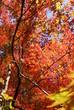 色鮮やかな秋の色