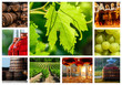 collage about vineyard and wine industry