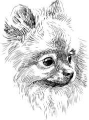 portrait of cute dog