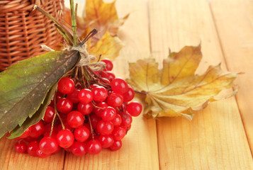 Red berries of viburnum with basket and yellow leaves