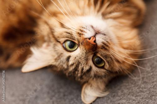 Foto op Aluminium Kat nice cat
