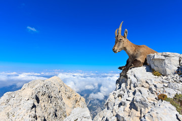 Capricorn female lying on rocks on the Montagio mountain