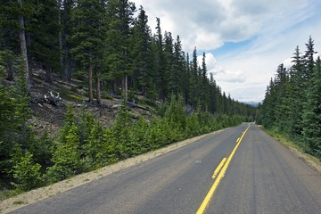 Colorado Forest Road