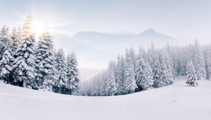Panorama of the foggy winter landscape in the mountains