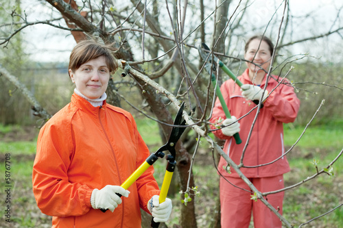 Two women trimming  tree