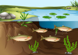 An ecosystem under the pond poster