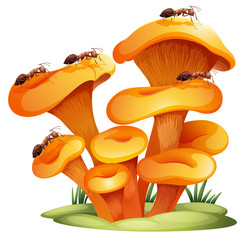 Fungi with ants