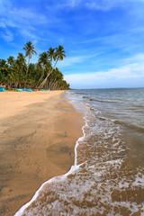 beach palm evening