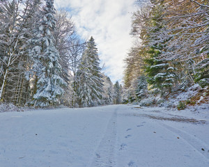 Snowy street through forest shined by sun