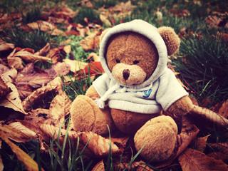 Meda sedi u travi