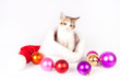 Kitten in a Santa hat and Christmas balls.