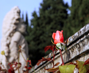 Pink Rosebud with a statue of a dwarf by a famous Venetian villa