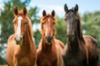 Group of three young horses on the pasture - 58776709