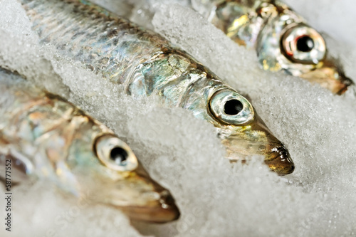 Baltic herring.