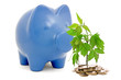 Piggy bank and money tree