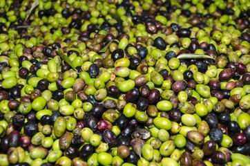 olive verdi e nere in un frantoio in Italia