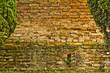 Muro con pianta rampicante