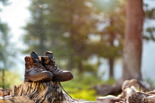 Tracking shoes are on the stump