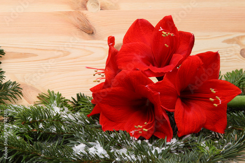 canvas print picture Weihnachtsblume