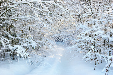Snow-covered road in winter forest.