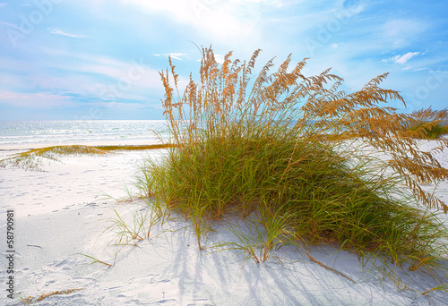 Summer landscape with Sea oats and grass dunes