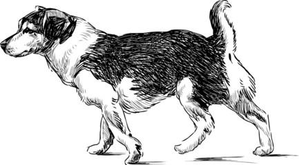 striding dog