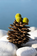 Pine Cone with Green Fruits
