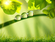 Leinwanddruck Bild - morning nature background with beautiful drop