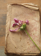 old book with flower gone to seed