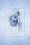 Snow Covered Rose Cyan Print