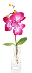 Beautiful artificial orchid, isolated on white