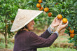 chinese agricultural farm worker